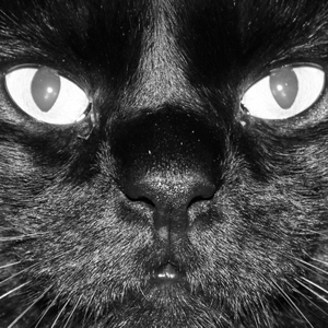 Clex_Cat- the look of the 7th life