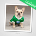 pets jerseys and costumes