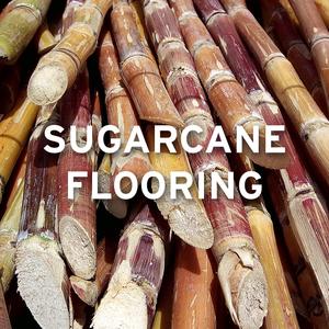 sugarcane UPDATE 13.6.