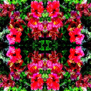 Tropical Kaleidoscope