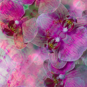 Essence of Orchid