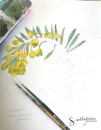 Jovoto euphorbia sketchbook width340